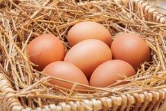 Die Eier gelegt mit Heu Stockbilder