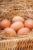 Die Eier gelegt mit Heu Stockfotos