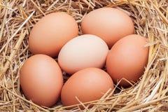 Die Eier gelegt mit Heu Stockbild