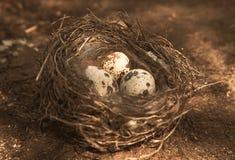Die Eier im Nest Lizenzfreie Stockfotos