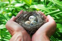 Die Eier im Nest Lizenzfreie Stockbilder