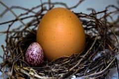 Die Eier im Nest Stockfotos