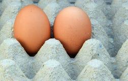 Die Eikästen mit zwei Eiern Lizenzfreies Stockfoto