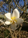 Die einzige Blume verließ auf meinem Baum stockfotografie