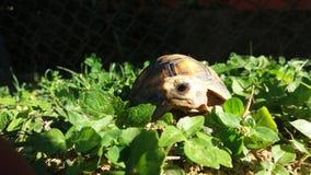 Die einzige Schildkröte Lizenzfreies Stockbild