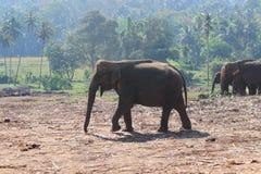 Die Elefanten auf Weg lizenzfreies stockfoto
