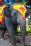 Die Elefanten von Thailand Stockbild