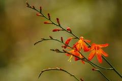 Die empfindliche Schönheit der Gebirgsblumen Stockbild