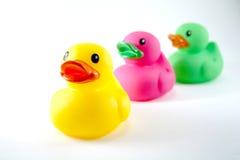 Die Enten in einer Reihe Stockfotos