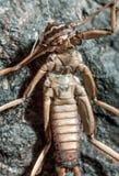 Die Entwicklung des Insekts lizenzfreie stockfotografie