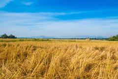 Die Ernte auf den Gebieten Stockfoto