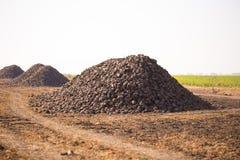 Die Ernte der Zuckerr?be wird auf dem Feld angeh?uft Thema ist landwirtschaftlich und l?ndlich An einem sonnigen Tag ist Herbst e stockfotografie