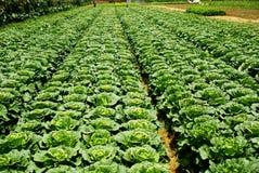 Die Ernte des Gemüses Lizenzfreie Stockbilder