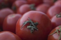 Die Ernte von reifen Tomaten 1 Stockfotografie