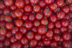 Die Ernte von reifen Tomaten 2 Stockfoto