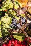 Die Ernte von Trauben in einem Korb in der Natur Lizenzfreies Stockfoto
