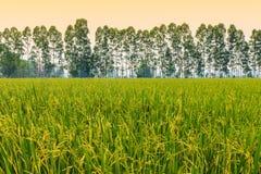 Die Ernten auf dem Gebiet, Stockfoto