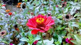 Die erstaunlichen Blumen Stockfoto