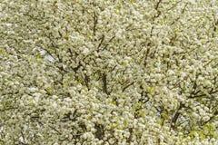 Die erste Blumenbeschaffenheit lizenzfreie stockfotos