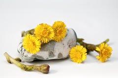Die ersten Blumen Stockbild