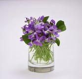 Die ersten Blumen Lizenzfreies Stockbild
