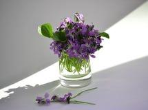 Die ersten Blumen Stockfoto