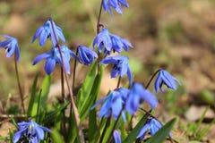 Die ersten Blumen des Frühlinges stockfotografie