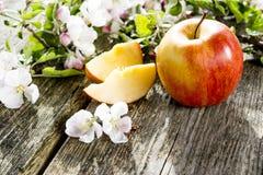 Die ersten Früchte des Herbstes Lizenzfreie Stockfotografie