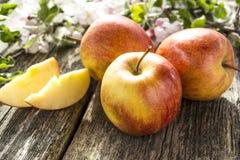 Die ersten Früchte des Herbstes Stockbild