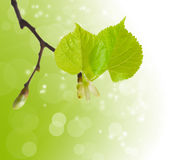 Die ersten Frühlingsblätter Stockbild