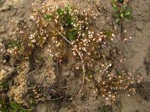 Die ersten Frühlingsblumen auf der sandigen Bank des Flusses stockbilder