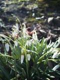 Die ersten Frühlingsringe lizenzfreies stockbild
