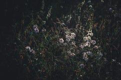 Die ersten sonnigen Morgenstrahlen der Sonne werden in einer Waldlichtung reflektiert Wilde Wiesenblumen und -kräuter Nahaufnahme lizenzfreie stockfotos