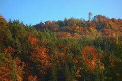 Die Erz-Gebirgsmischwälder lizenzfreies stockfoto