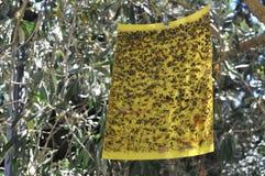 Die Falle für Insekten Lizenzfreies Stockbild