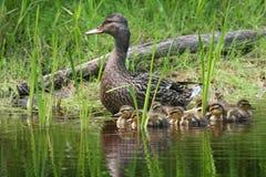 Die Familie einer Mutter Stockfotografie