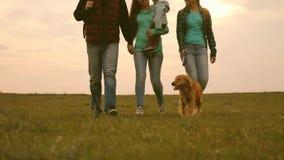 Die Familie reist mit dem Hund über dem Feld mit Rucksäcken Vati, Baby, Mutter, Tochter und Schoßhund, Touristen verbindung stock footage