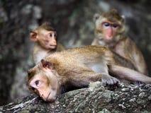 Die Familie von Affen auf dem Felsen Lizenzfreies Stockbild