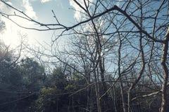 Die Farbe des Herbstes stockbilder