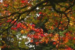 Die Farbe von Herbst-/Fallblättern stockfotos