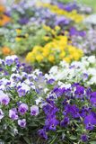 Die Farbe von spring_2 stockbild