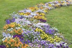 Die Farbe von spring_3 lizenzfreies stockbild