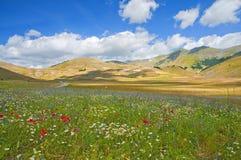 Die Farben der üppigen grünen Ebenen von Castelluccio Stockfoto