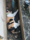 Die Farben der Katze drei Lizenzfreies Stockfoto