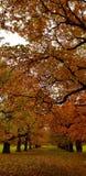 Die Farben des englischen Herbstes lizenzfreies stockfoto
