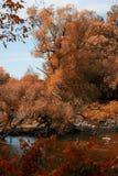 Die Farben des Fall-Laubs in einem kanadischen Wald Lizenzfreies Stockfoto
