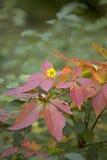 Die Farben des Herbstes Stockfoto