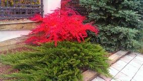 Die Farben des Herbstes Lizenzfreie Stockfotografie