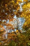Die Farben des Herbstes Stockfotografie