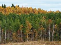 Die Farben des Herbstwaldes, -details und -nahaufnahme Die bunten Farben der B?ume lizenzfreies stockfoto
